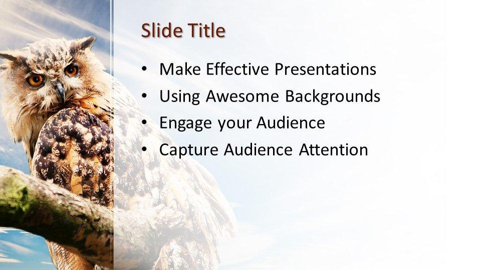 Powerpoint presentacion Búho