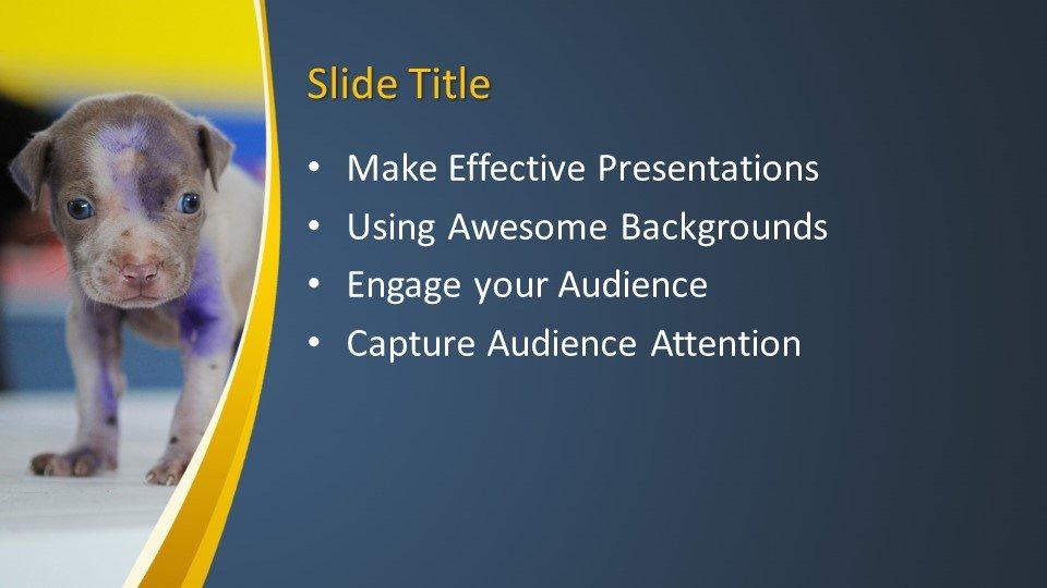 Powerpoint presentacion Veterinaria