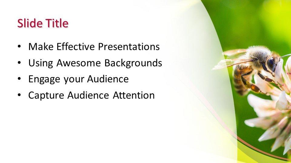 Powerpoint presentacion Abeja
