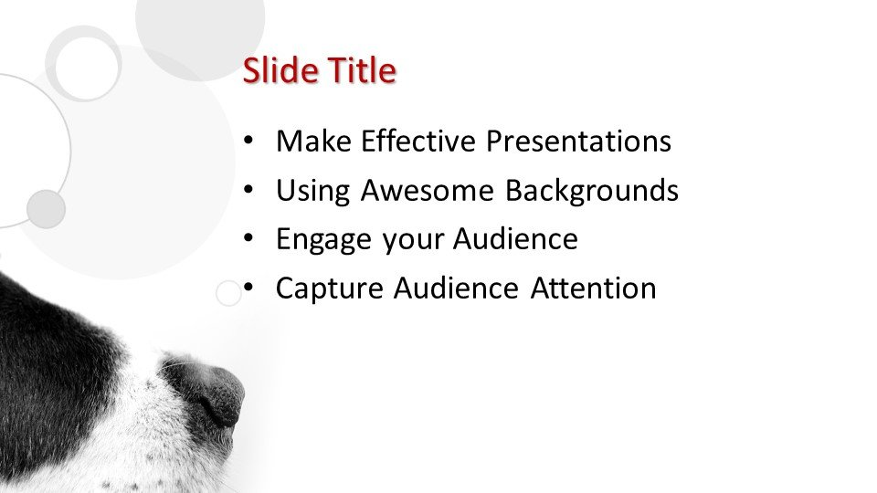 Powerpoint presentacion Perro
