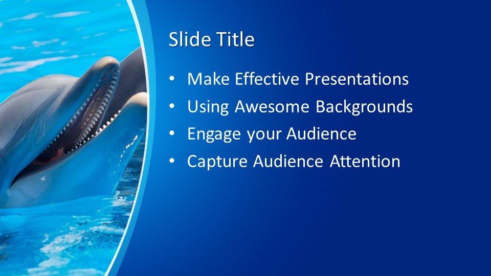 Powerpoint presentacion Delfín
