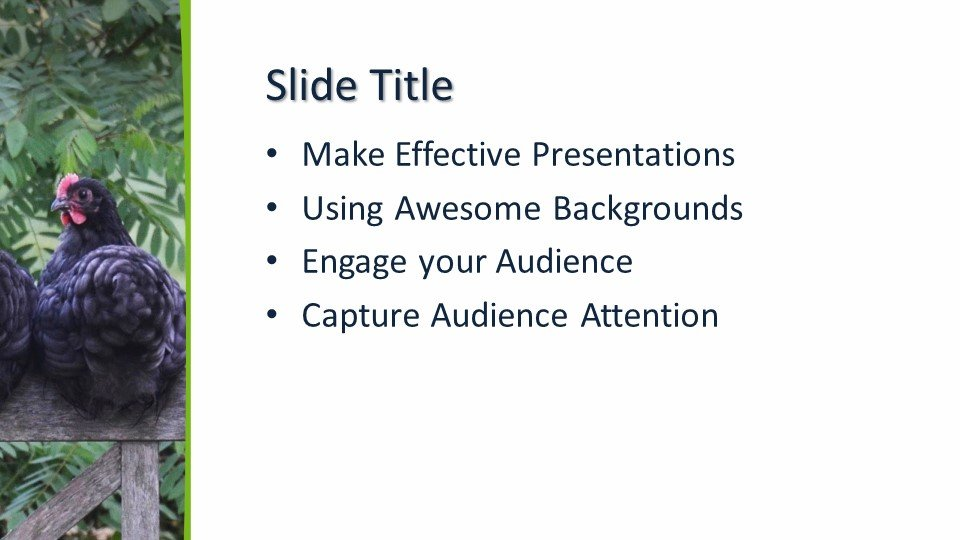 Powerpoint presentacion Gallinas