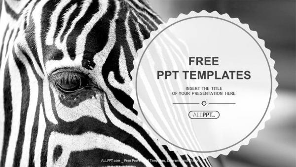Descargar Presentaciones plantillas powerpointImagen monocromática de la cara de una cebra en primer plano