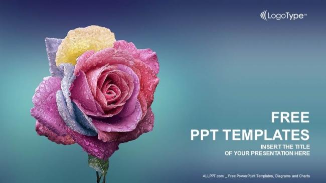 Diapositivas plantilla powerpointMulti Colores Rosa
