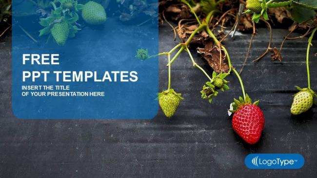 Presentaciones plantilla powerpointCampo de fresas